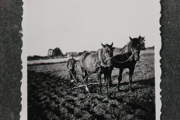 sulane; talu; hobune; kesa; künd; Paide