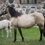 hobuste müük Elksi