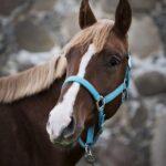 hobuste müük Pegasus